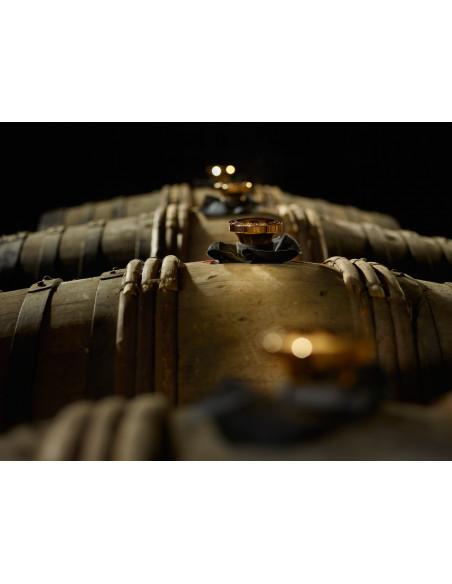 Camus Extra Dark and Intense Cognac 010