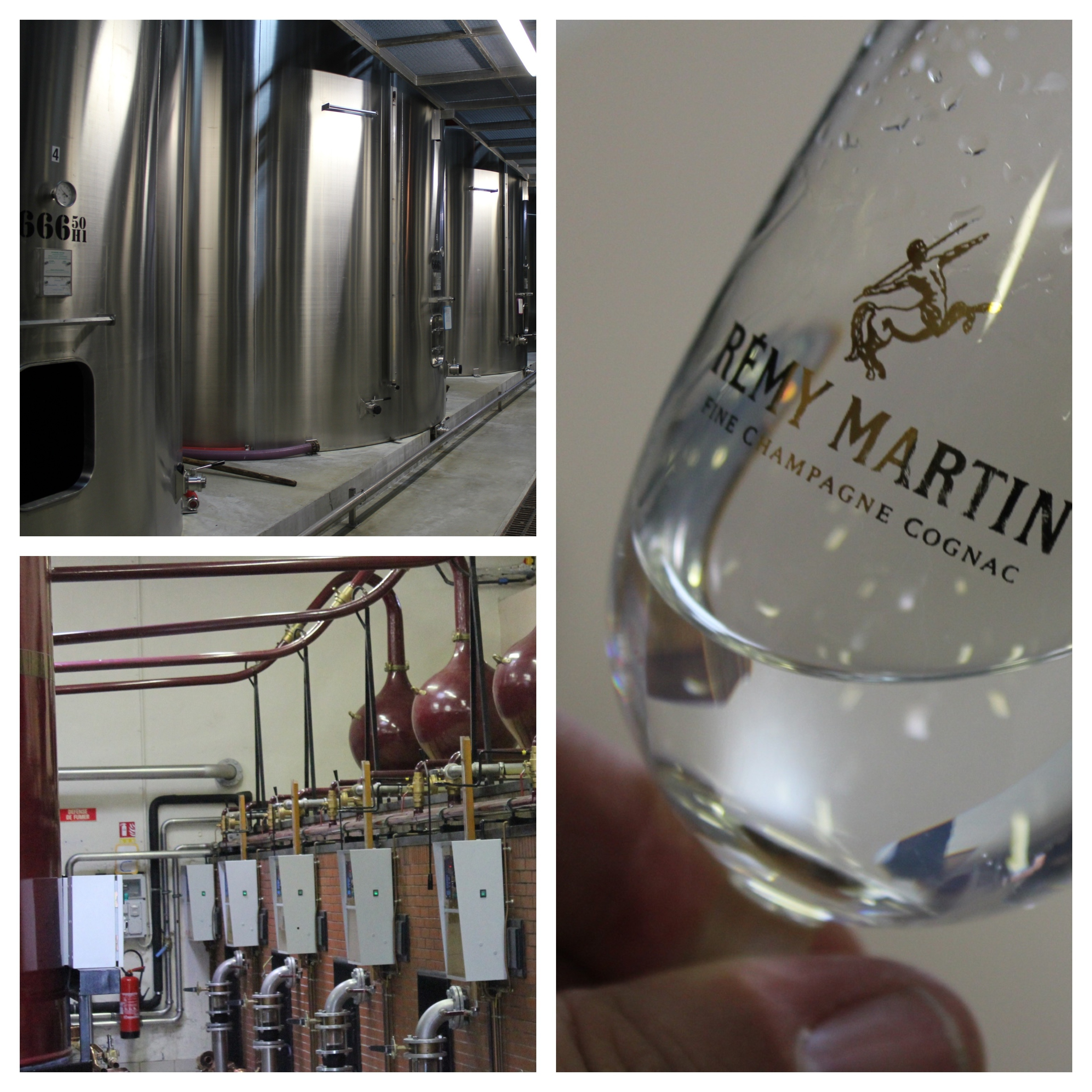 Distillery and winery Remy Martin