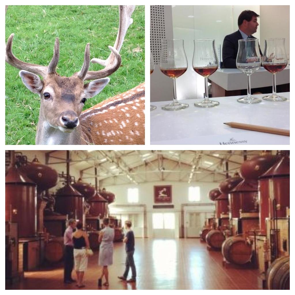 visiting-cognac